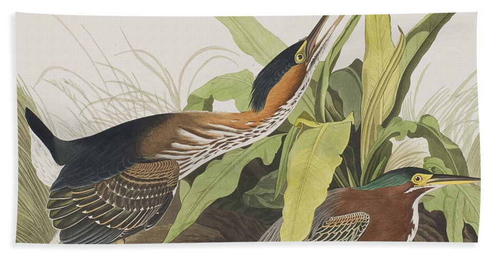 Heron Hand Towel featuring the painting Green Heron by John James Audubon