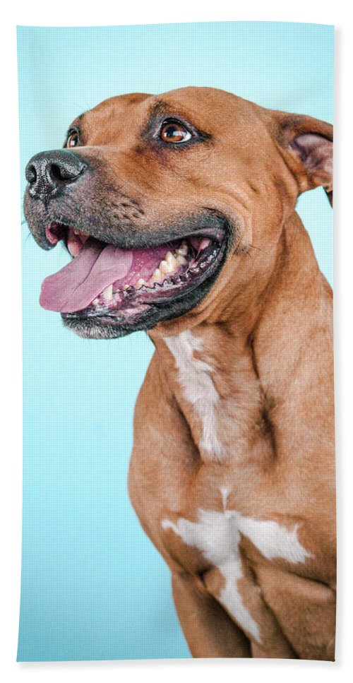 Dog Bath Sheet featuring the photograph Gripper by Pit Bull Headshots by Headshots Melrose