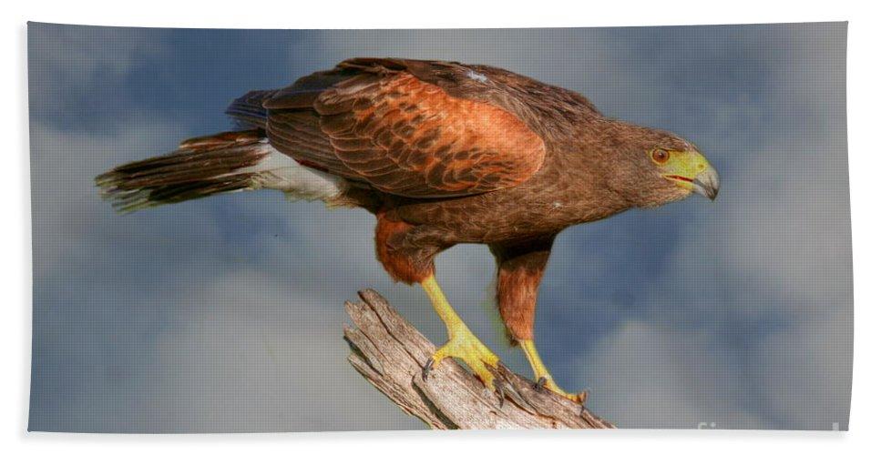 Birds Bath Sheet featuring the photograph Harris's Hawk On Watch by Myrna Bradshaw