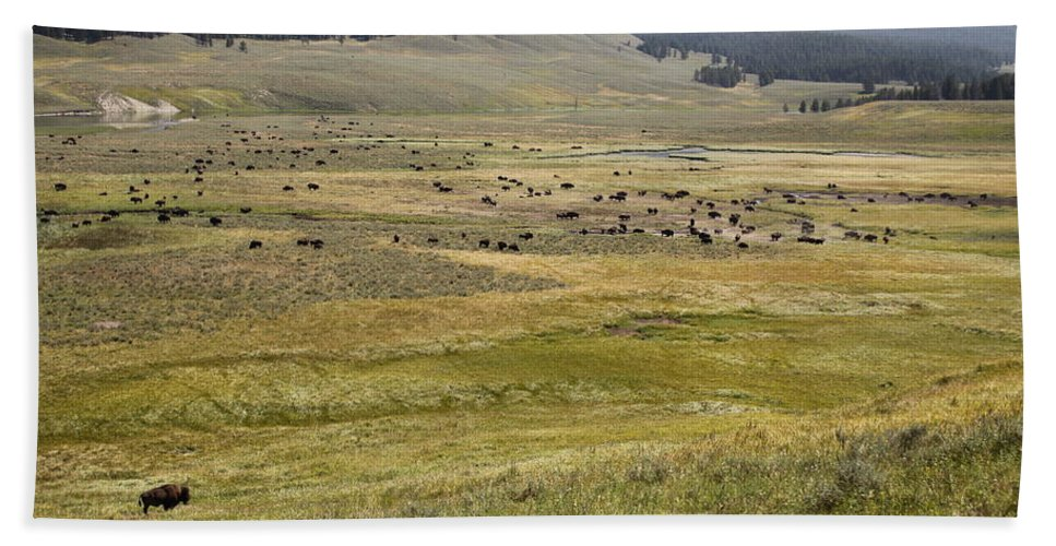 Bison Bath Sheet featuring the photograph Hayden Valley Herd by Steve Aserkoff