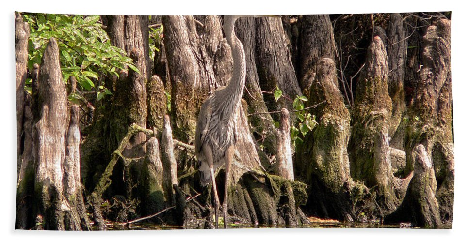 Great Blue Heron Bath Sheet featuring the photograph Heron And Cypress Knees by Steven Sparks