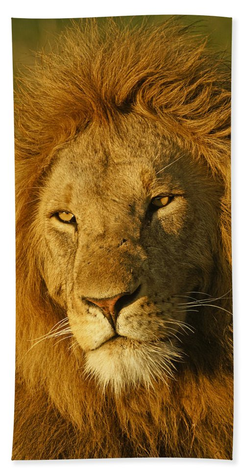 Lion Hand Towel featuring the photograph His Majesty by Michele Burgess