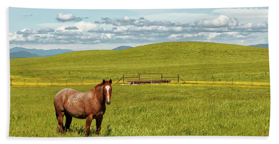 Horse Hand Towel featuring the photograph Horse Grazing by Robert Urwyler