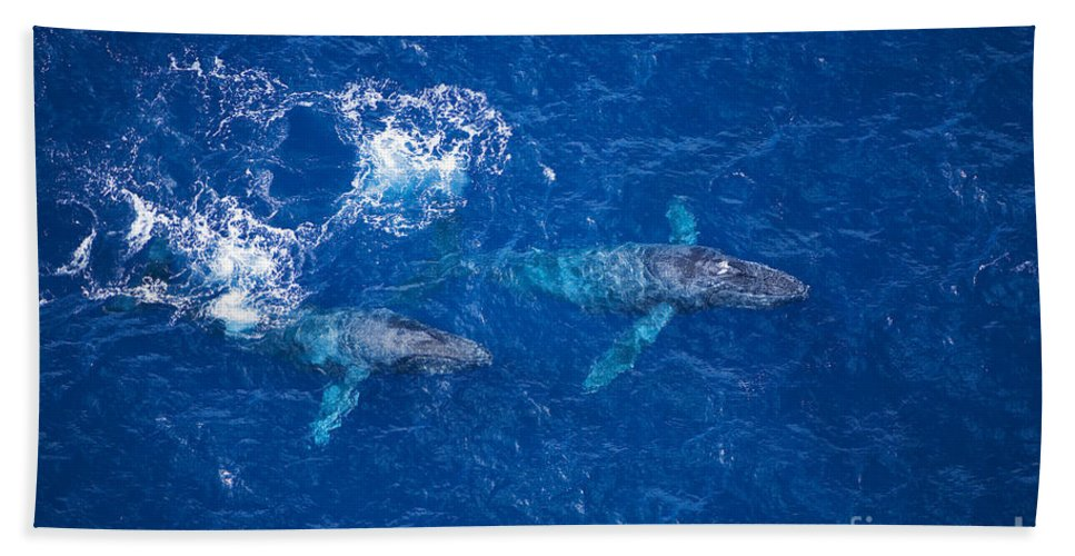 Above Bath Towel featuring the photograph Humpback Whales Aerial by Ron Dahlquist - Printscapes