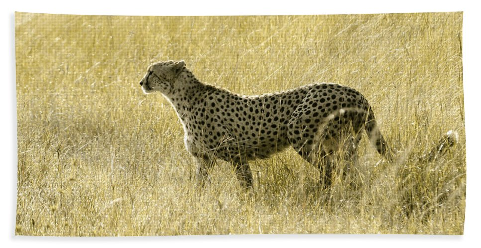 Africa Hand Towel featuring the photograph Hunting Cheetah by Michele Burgess