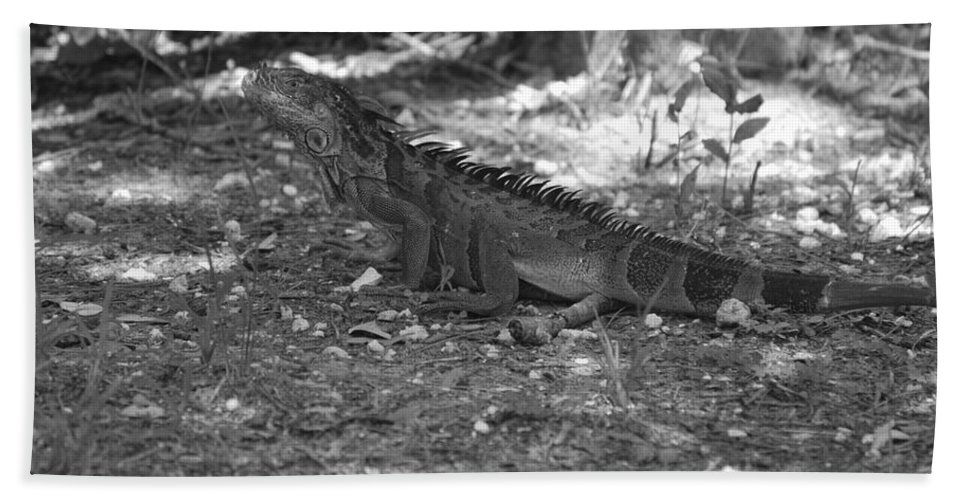 Black And White Bath Sheet featuring the photograph I Iguana by Rob Hans