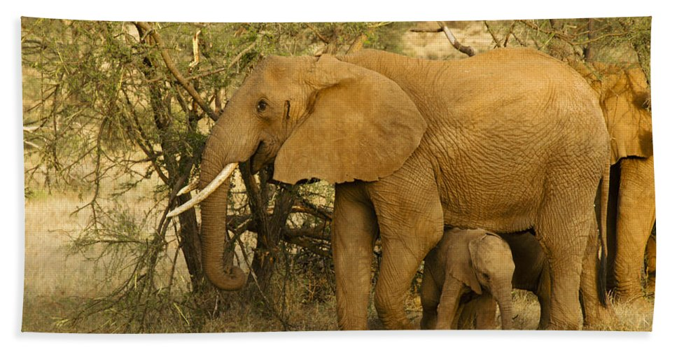 Africa Hand Towel featuring the photograph I Love My Big Mama by Michele Burgess