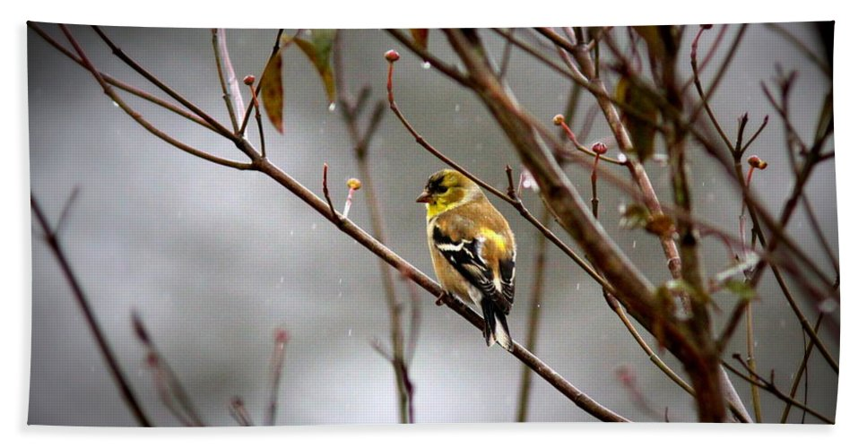 American Goldfinch Bath Sheet featuring the photograph Img_0001 - American Goldfinch by Travis Truelove