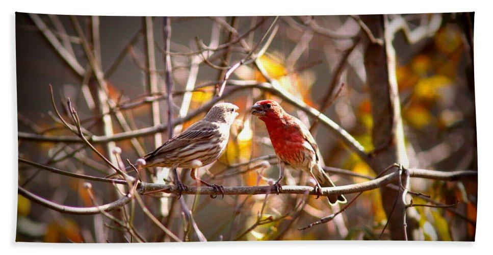 House Finch Bath Sheet featuring the photograph Img_0001 - House Finch by Travis Truelove