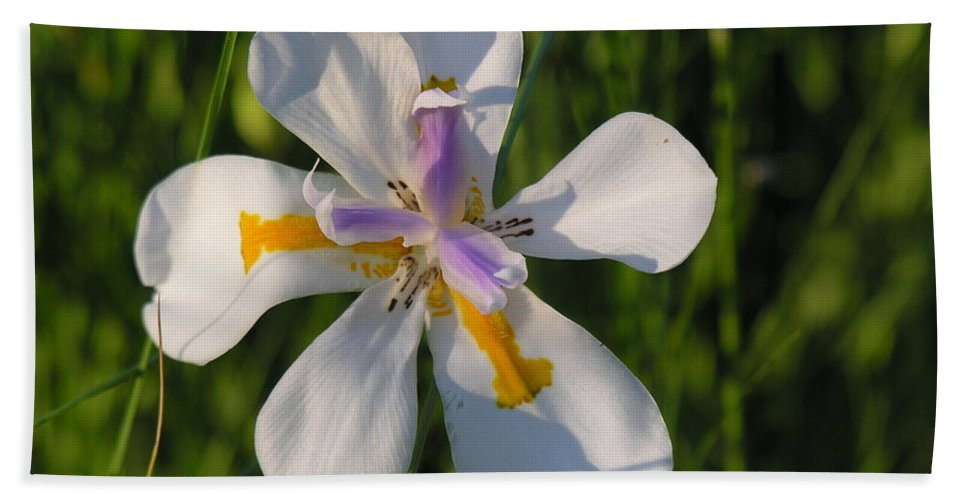 Lilly Bath Towel featuring the photograph Iris by Diane Greco-Lesser