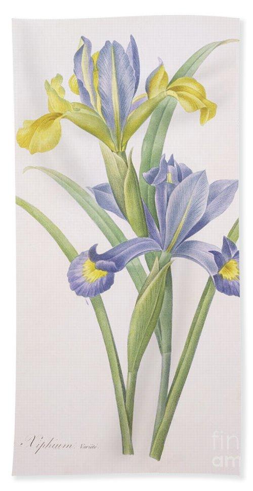 Iris Hand Towel featuring the drawing Iris Xiphium by Pierre Joseph Redoute