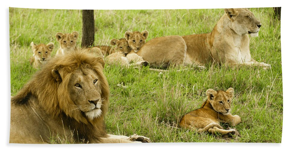 Lion Bath Towel featuring the photograph It's All About Family by Michele Burgess