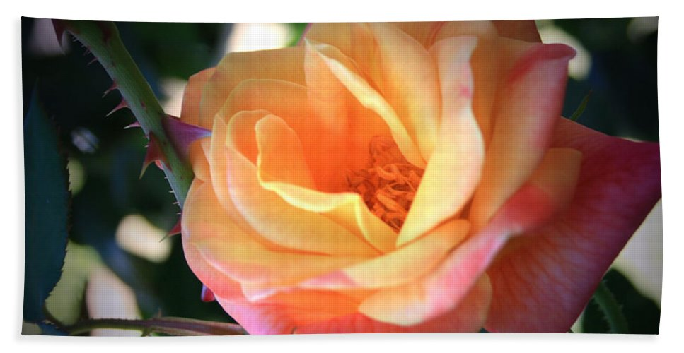 Jacob's Hand Towel featuring the photograph Jacob's Rose by Marna Edwards Flavell