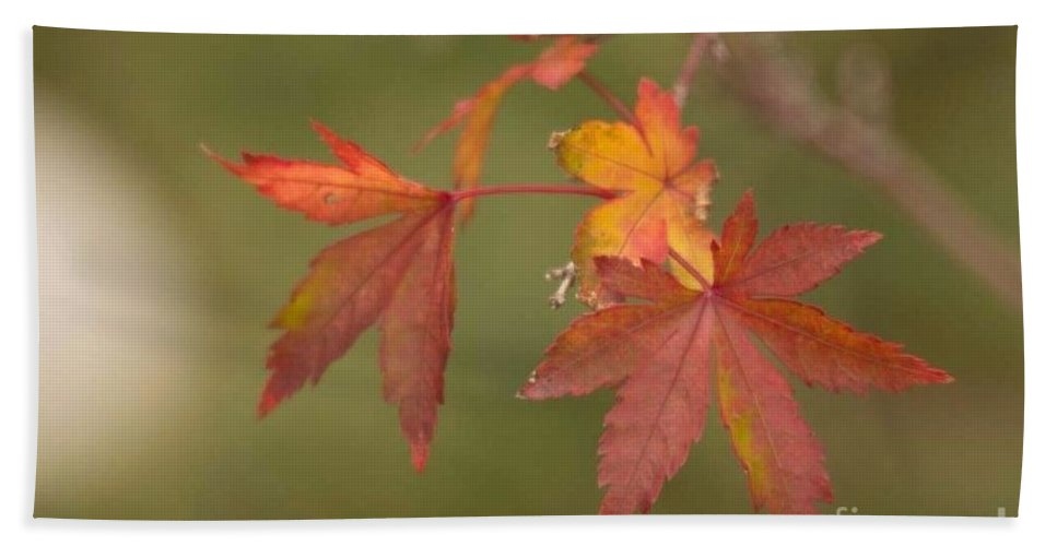 Japanese Maple Hand Towel featuring the photograph Japanese Maple by Marta Robin Gaughen