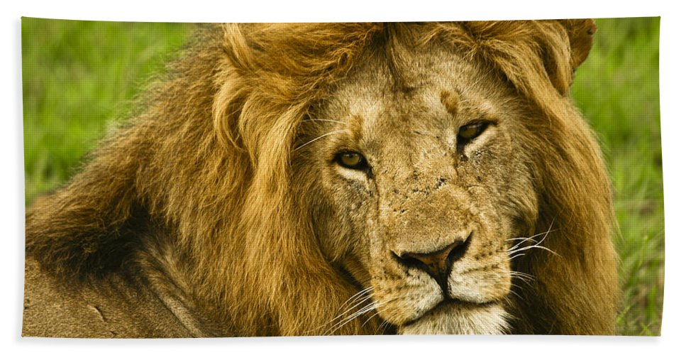 Lion Hand Towel featuring the photograph King Of The Savanna by Michele Burgess