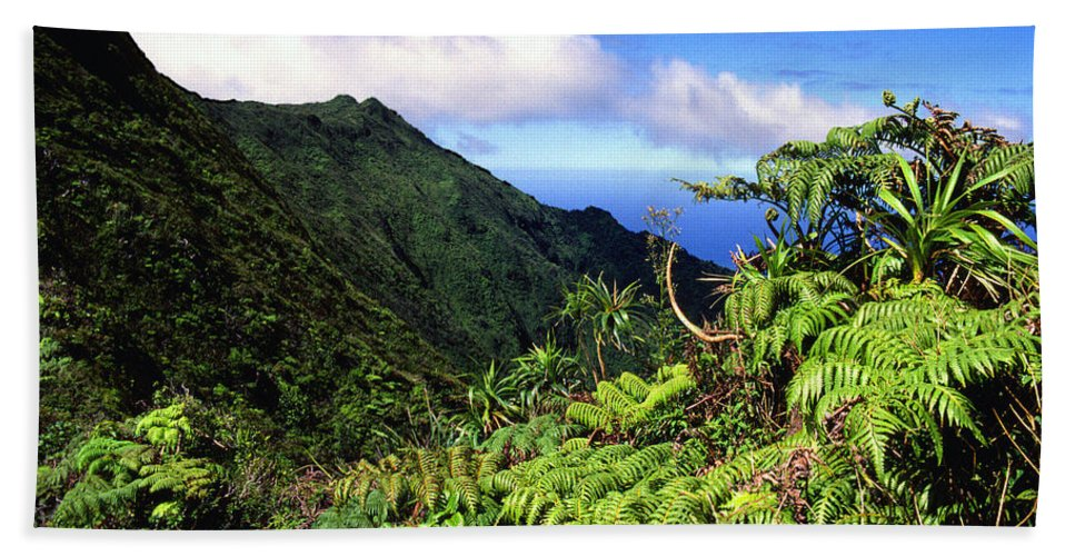Hapu Tree Ferns Bath Sheet featuring the photograph Koolau Summit Trail by Thomas R Fletcher
