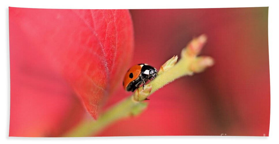 Beetle Bath Sheet featuring the photograph Ladybird On An Autumn Leaf by MSVRVisual Rawshutterbug