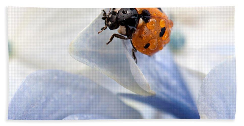 Ladybug Bath Towel featuring the photograph Ladybug by Nailia Schwarz