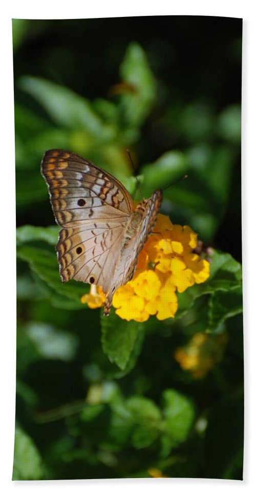 Butterfly Bath Sheet featuring the photograph Landed by Rob Hans