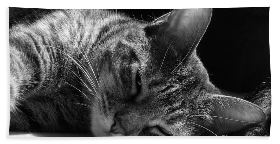 Cat Hand Towel featuring the photograph Lazy Afternoon by Maria Bonnier-Perez