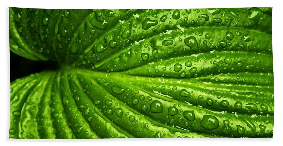 Leaf Hand Towel featuring the photograph Leaf by FL collection