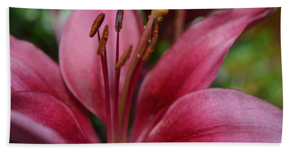 Lilys Hand Towel featuring the photograph Lily 1 by Brad Kennedy