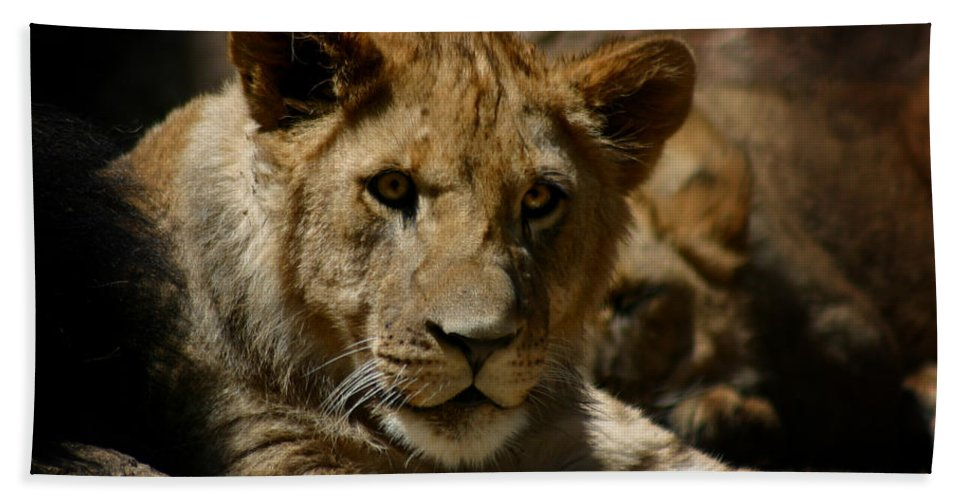 Lion Bath Towel featuring the photograph Lion Cub by Anthony Jones