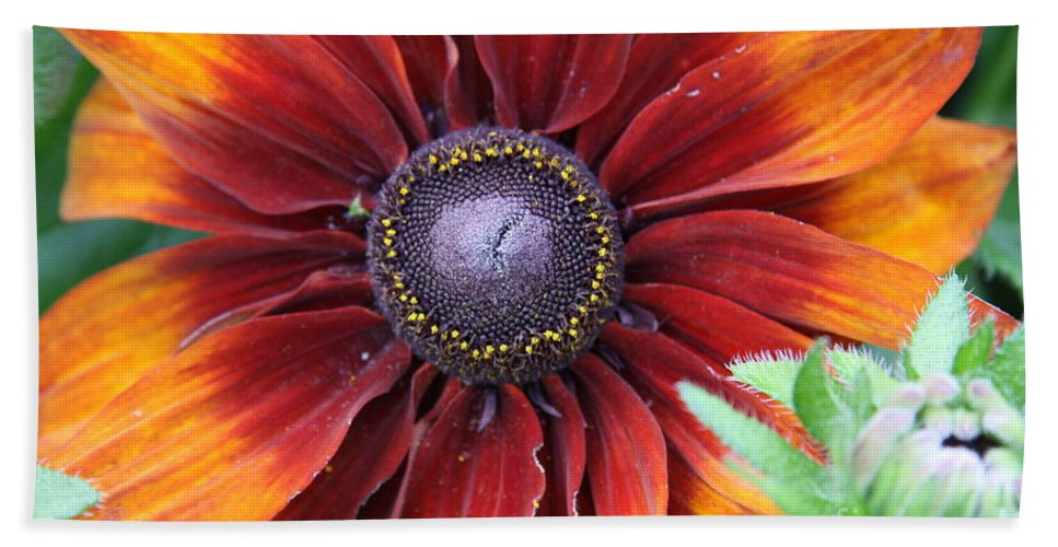 Sunflower Hand Towel featuring the photograph Little Sunshine by Christiane Schulze Art And Photography