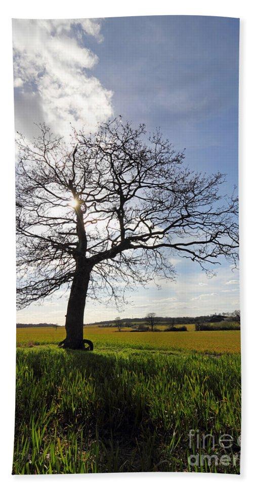 Lone Oak Tree In English Countryside Hand Towel featuring the photograph Lone Oak Tree In English Countryside by Julia Gavin