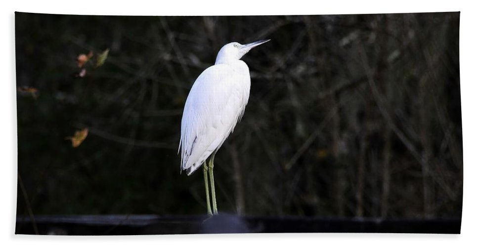 Looking Hand Towel featuring the photograph Looking by David Lee Thompson