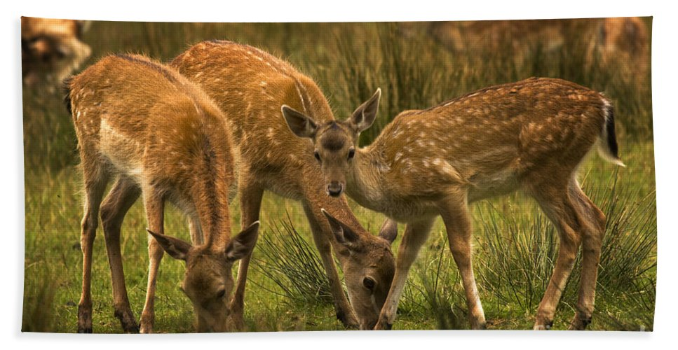 Fallow Deer Hand Towel featuring the photograph Lunch Time by Angel Ciesniarska
