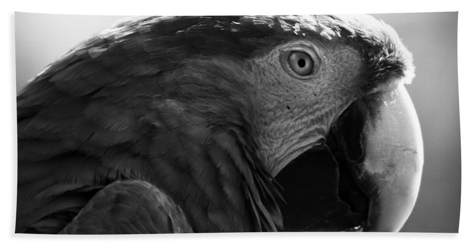 Macaw Bath Sheet featuring the photograph Macaw by Angel Ciesniarska