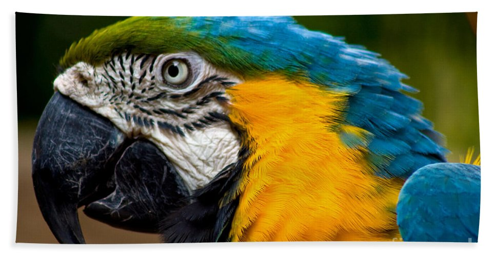 Macaw Bath Sheet featuring the photograph Macaw by Thomas Marchessault