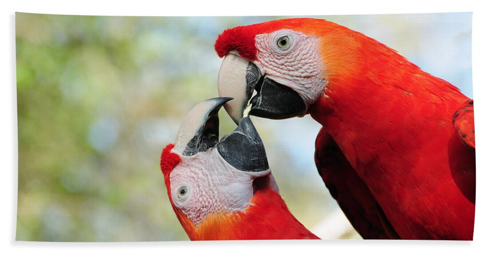 Bird Hand Towel featuring the photograph Macaws by Steven Sparks