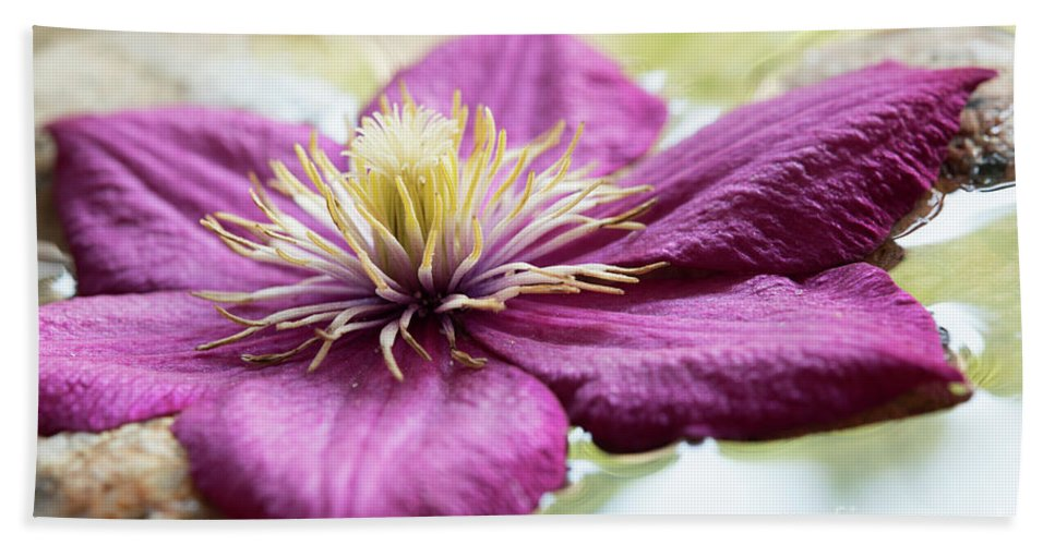 Meditation Hand Towel featuring the photograph Floating Clematis by Michelle Himes