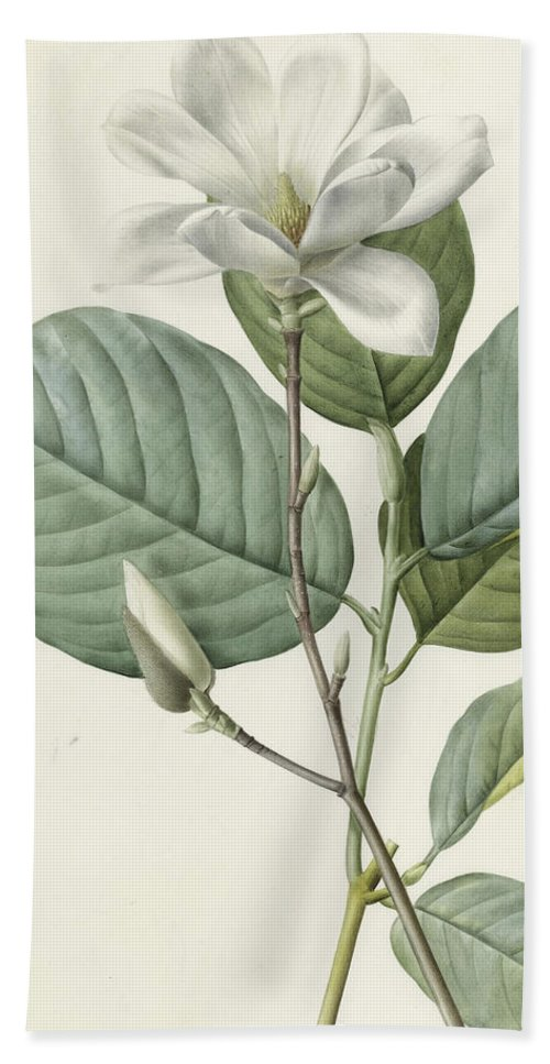 Magnolia Bath Towel featuring the painting Magnolia by Pierre Joseph Redoute