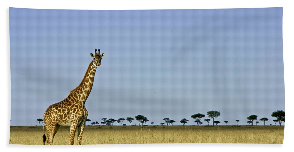 Africa Hand Towel featuring the photograph Majestic Giraffe by Michele Burgess