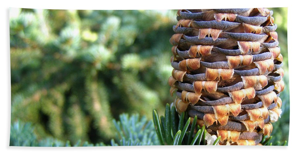 Evergreens Hand Towel featuring the photograph Masterful Construction - Spruce Cone by Angie Rea