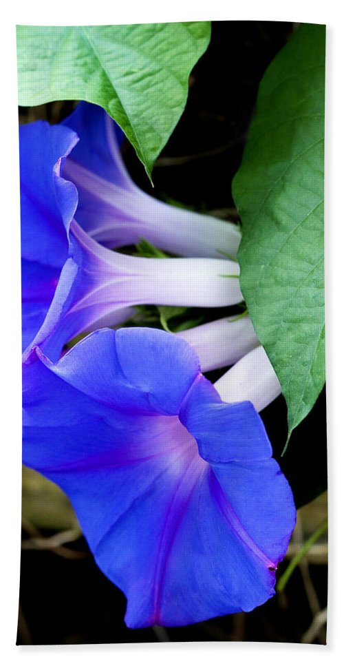 Morning Glory Hand Towel featuring the photograph Morning Glory by Marilyn Hunt