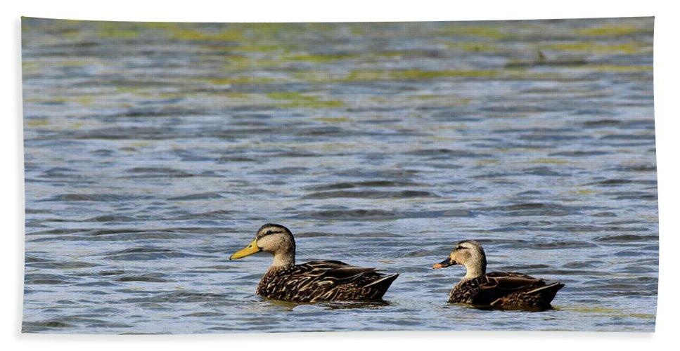 Duck Bath Sheet featuring the photograph Mottled Ducks by Dwight Eddington