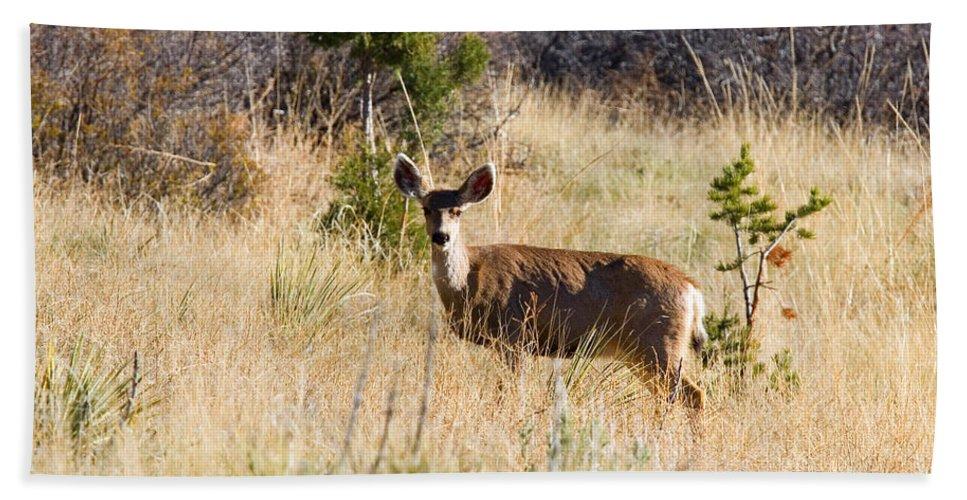 Deer Bath Towel featuring the photograph Mule Deer In Garden Of The Gods by Steve Krull