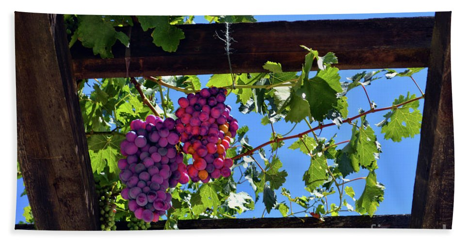 Inglenook Vineyard Hand Towel featuring the photograph Napa Valley Inglenook Vineyard -2 by Tommy Anderson