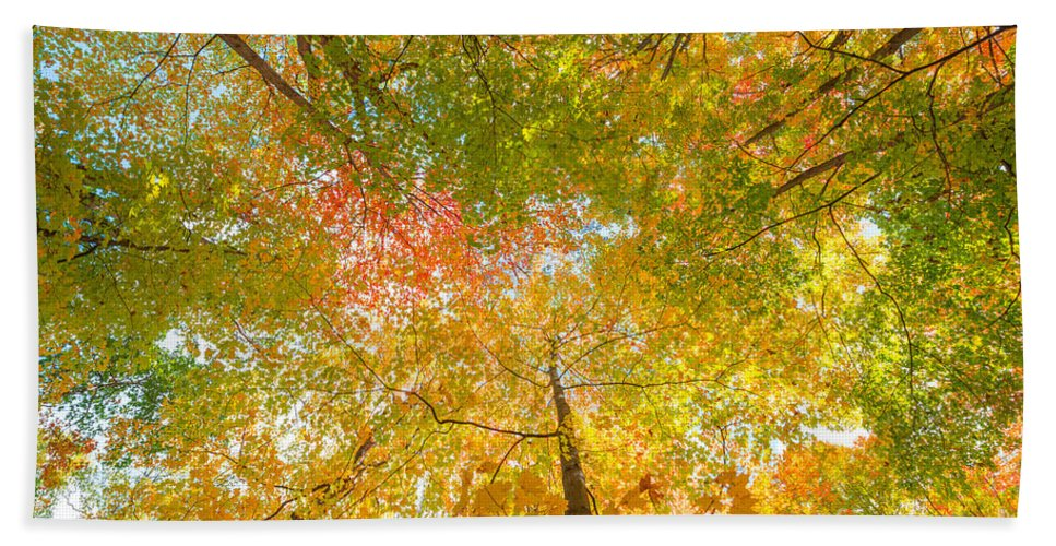 Fall Foliage Bath Sheet featuring the photograph Natures Canopy Of Color by Michael Ver Sprill