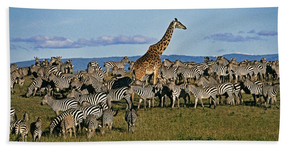 Africa Hand Towel featuring the photograph Odd Man Out by Michele Burgess
