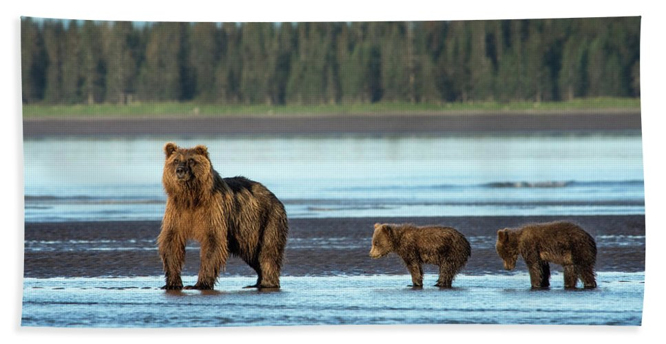 Grizzly Bear Bath Sheet featuring the photograph On The Lookout by Claudia Kuhn