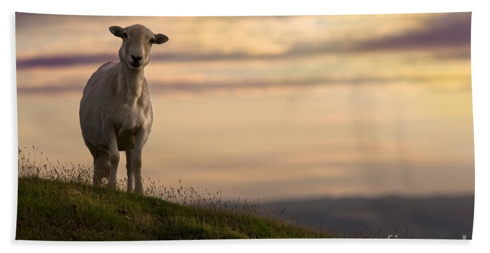 Sheep Bath Towel featuring the photograph On The Top Of The World by Angel Tarantella