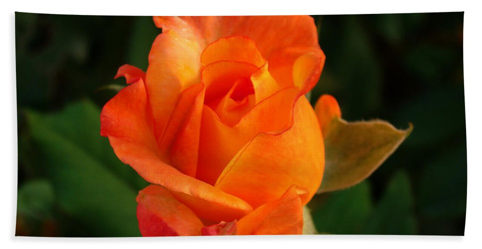 Rose Hand Towel featuring the photograph Orange Rose by Sandy Keeton