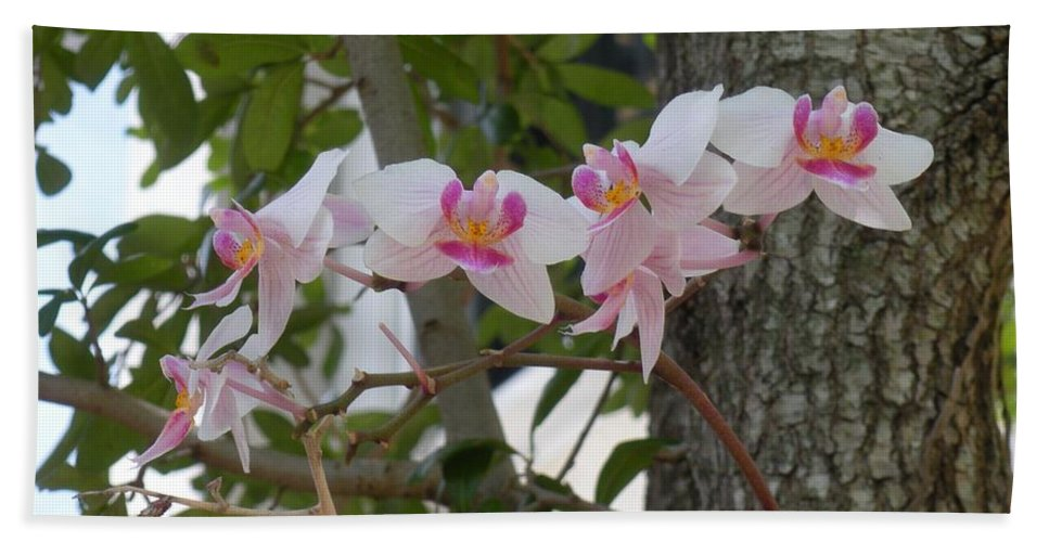 Hand Towel featuring the photograph Orchid Bunch by Maria Bonnier-Perez