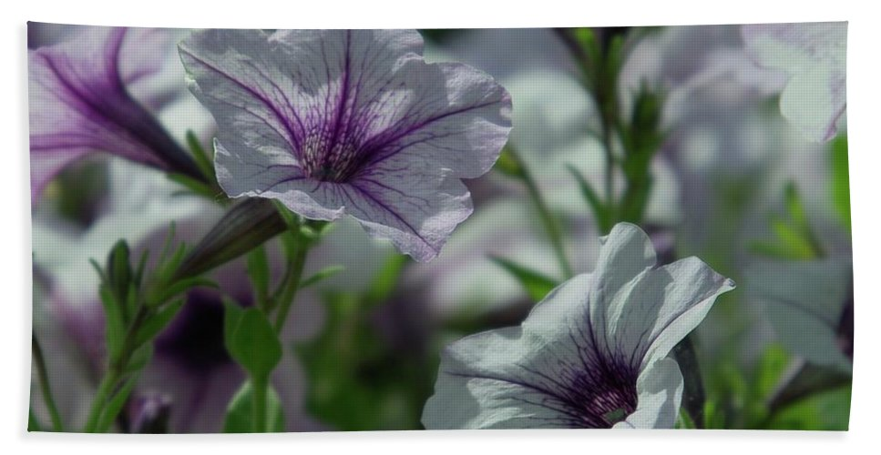 Flowers Bath Sheet featuring the photograph Pansies by Jeff Swan