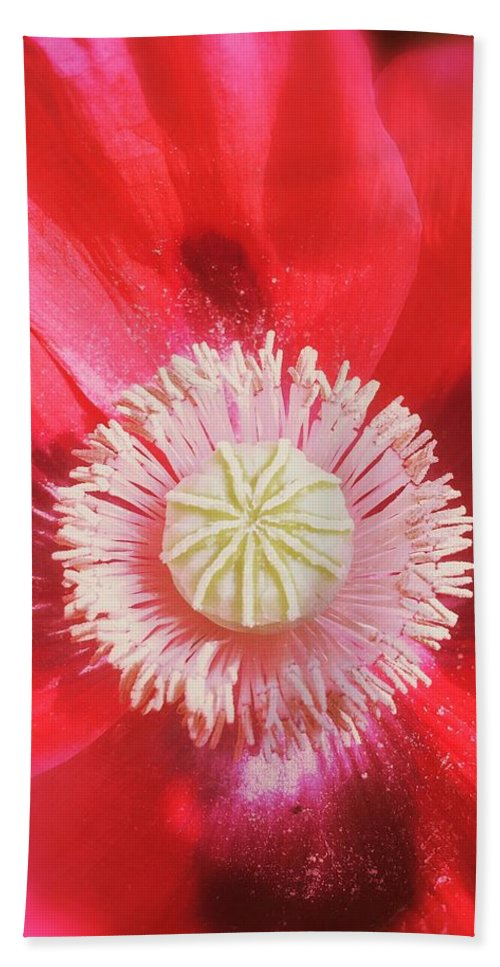 Pink Bath Sheet featuring the photograph Pink Poppy by Mo Barton